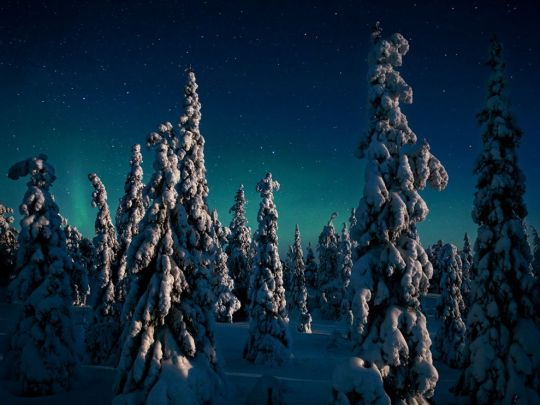 LIVING SUCCESS 3D--candle-spruces-finland