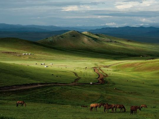LIVING SUCCESS 3D--horses-mongolia-leong