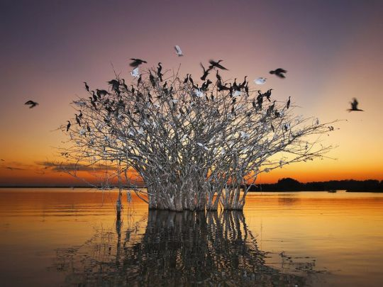 LIVING SUCCESS 3D--pantanal-birds-brazil